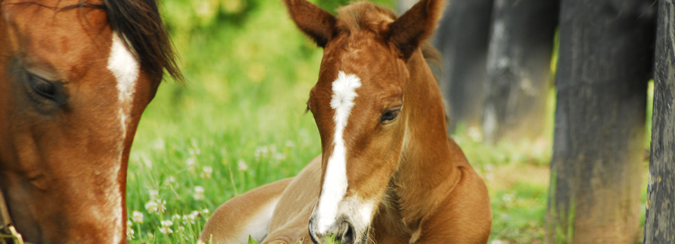 Monocacy Equine Veterinary Clinic-Equine Dentistry in Maryland