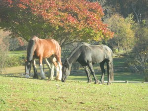 Equine Reproduction and Breeding in Maryland | Monocacy Equine