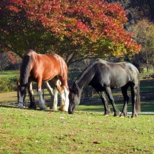Equine Dentistry and more in Maryland