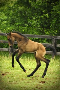 Equine Vaccinations and Deworming in Maryland