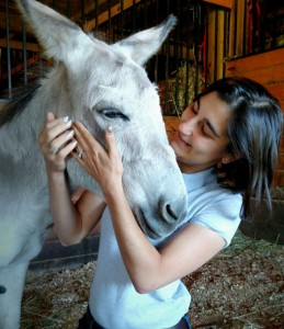 Equine dentistry in Maryland-Monocacy Equine Veterinarian Clinic
