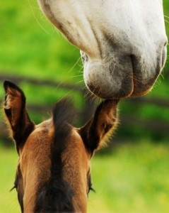 Equine Reproduction & Breeding in Maryland