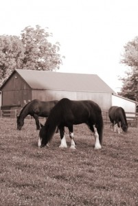 Equine Healthcare and Dentistry in Maryland