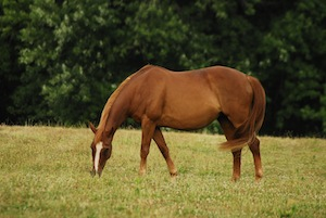 Equine Internal Medicine and Equine Dentistry in Maryland